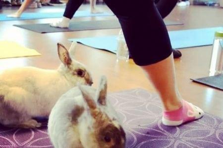 bunny yoga