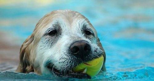Doggie dip pic
