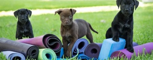 Donuts and Downdog Puppy Yoga @ Irsay Family YMCA at CityWay | Indianapolis | Indiana | United States
