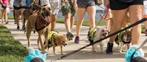 Pet Walk on the Trails @ Hendricks Regional Health YMCA | Avon | Indiana | United States