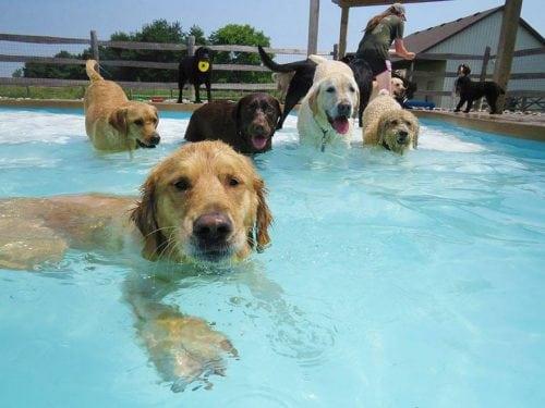 Doggie Dip @ Hendricks Regional Health YMCA | Avon | Indiana | United States